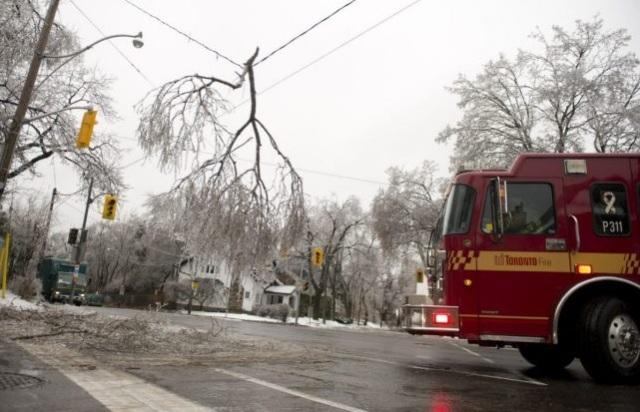 Tree limb on power lines