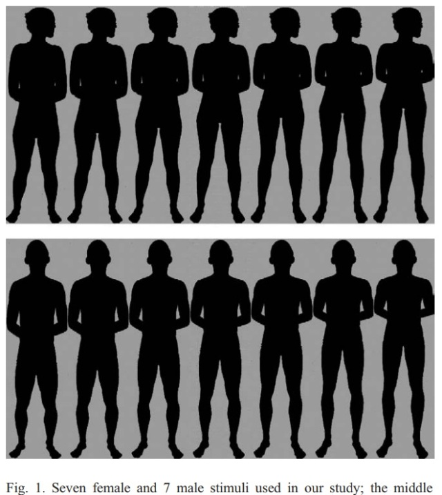 Leg and attractiveness study - shapes