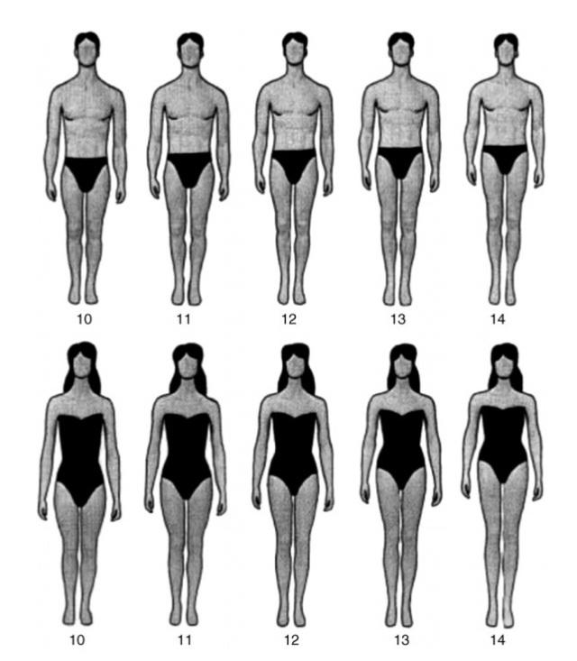 Legs-body ratio types